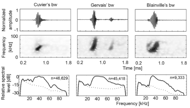 Beaked whale click waveforms